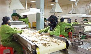 Memproyeksi Peluang Industri Biofarmaka Nasional